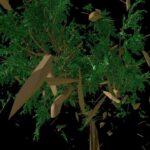 tree_010_01_v002_md