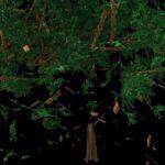 tree_010_01_v003_md